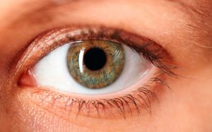 How eyes help to predict diseases