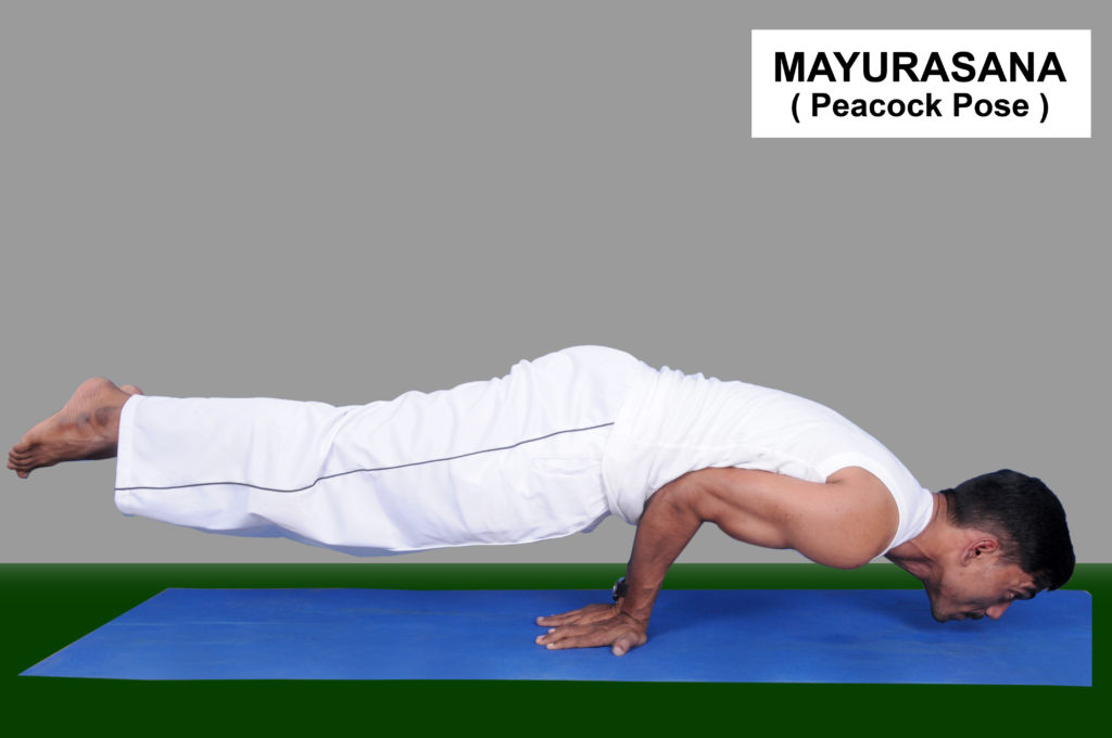 Mayurasana how to do